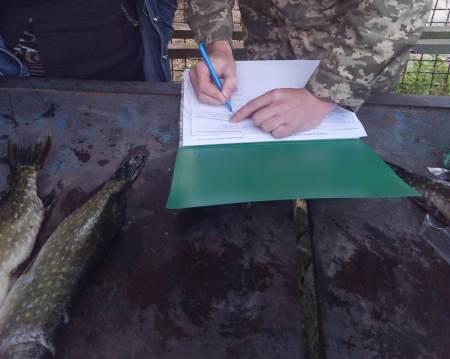 Порушник завдав збитків на понад 1 тис. грн, - Волинський рибоохоронний патруль