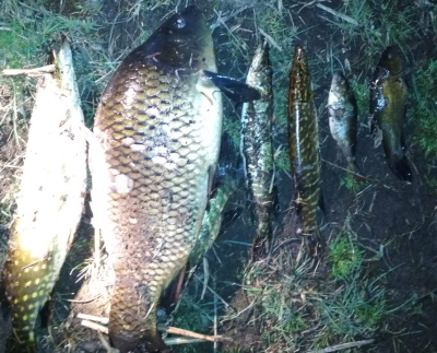 Порушники завдали збитків на майже 2 тис. грн, - Волинський рибоохоронний патруль