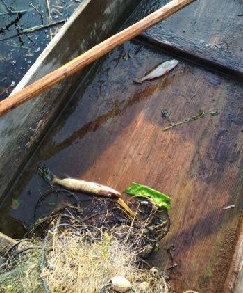 За тиждень Волинським рибоохоронним патрулем зафіксовано 24 порушення природоохоронного законодавства