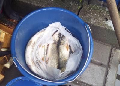 За тиждень порушники завдали майже 8 тис. грн збитків, - рибоохоронний патруль Волині