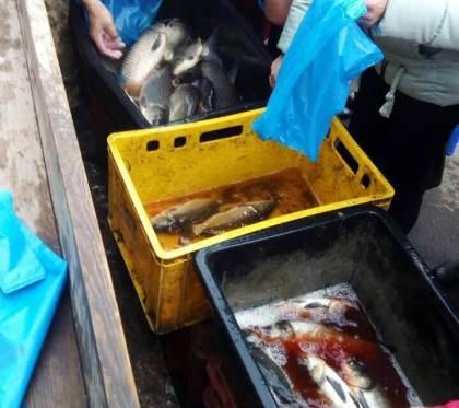 Протягом тижня затримано 507 кг незаконно добутої риби, - Волинський рибоохоронний патруль