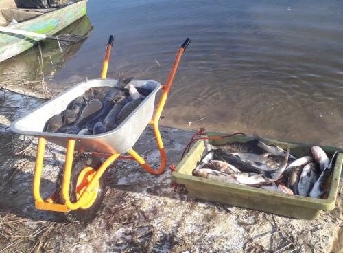 У водойми Волинської області вчергове випустили понад 3 тонни цінних видів риб