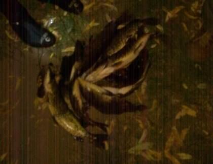 Порушники за день завдали майже 3 тис. грн збитків, - Волинський рибпатруль
